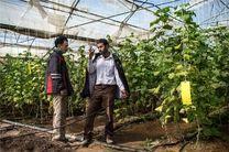 متقاضیان مشاغل خانگی کشاورزی تسهیلات کمبهره دریافت میکنند