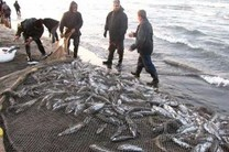 صید ماهیهای استخوانی در مازندران تا 31 فروردین تمدید شد
