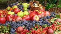 تولید محصولات باغی خراسان رضوی، افزون بر یک میلیون تن در سال می باشد