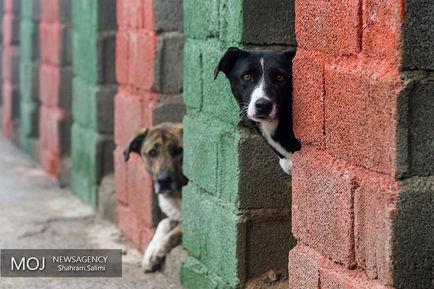 پناهگاه+سگ+های+ولگرد+در+مرکز+وفا