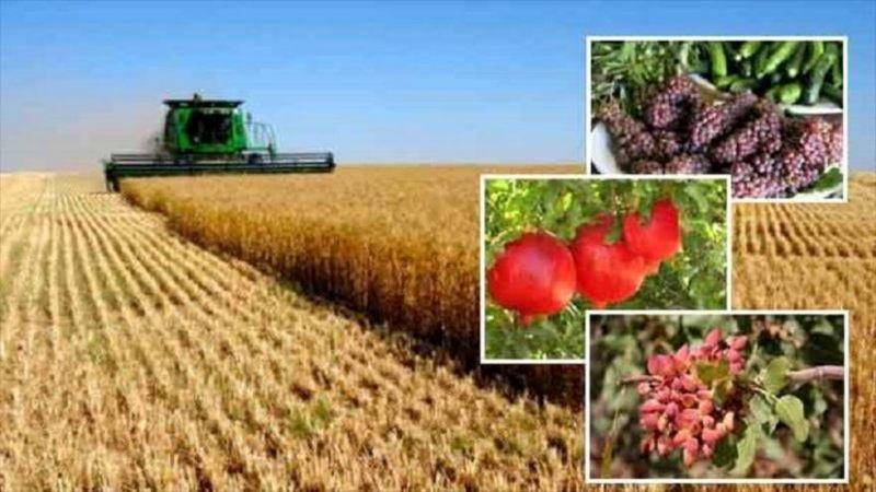 اختصاص 31 هزار هکتار از اراضی پارس آباد به کشت محصولات کشاورزی
