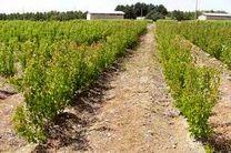 تولید 3.5 میلیون نهال برای مقابله با ریزگردها در خوزستان