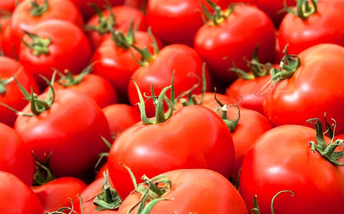 امکان صادرات گوجه فرنگی به عراق از طریق گمرکات فراهم شد