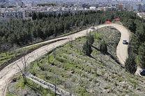 کاشت بیش از ۳۰۰ هزار اصله درخت در یک سال گذشته