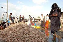 صید هزار و ۳۶۱ تن میگو در آبهای هرمزگان
