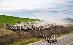 خروج دام عشایر از مراتع قشلاقی رودان