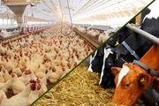 اولین قرارداد کارخانه های خوراک دام یزد با مسئول فنی بسته شد
