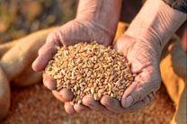 تحویل ۱۷ هزار و ۵۰۰ تن آرد به نانواییهای استان/ 48 تن بذر گواهی شده گندم بین کشاورزان گیلانی توزیع شد