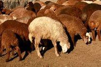 گوشت قرمز گران شد / مصرف گوشت سفید دوبرابر استاندارد جهانی است