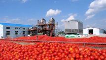 تاثیر یک تا دو درصدی بنزین بر قیمت صیفیجات/ گوجهفرنگی گلخانه بهزودی عرضه و قیمت را تعدیل میکند