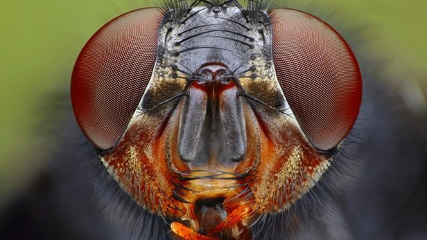 الهامگیری از چشم حشرات برای سلولهای خورشیدی بادوام