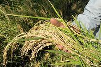 جزئیات نرخ تورم تولیدات زراعی، باغی و دامداری سال گذشته