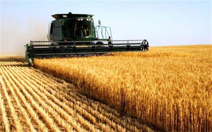 افزایش انبار خانگی گندم/تهدید پایداری کشت گندم
