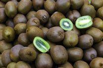 صادرات 60 هزار تن کیوی از گیلان به خارج از کشور/وجود حدود 724 هکتار باغ غیربارور کیوی در استان گیلان