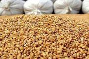 340 تن نهاده دامی احتکار شده در شهرستان نمین کشف شد