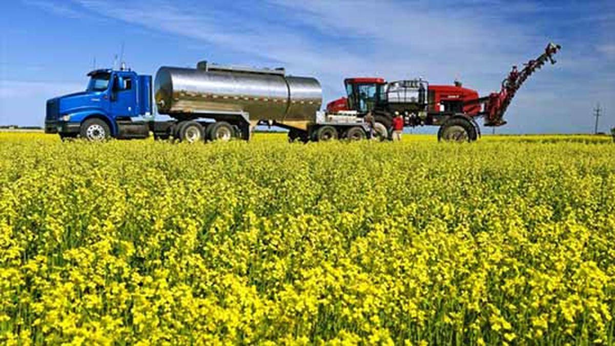 برداشت بیش از هزار و ۱۰۰ تن دانه روغنی کلزا از مزارع شهرستان مشهد