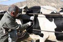 تب مالت سال گذشته ۱۸ هزار ایرانی را مبتلا کرد