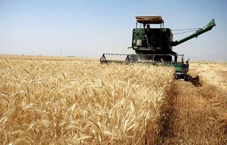جرایم کشاورزان خوزستان تا سقف 250میلیون ریال بخشیده می شود