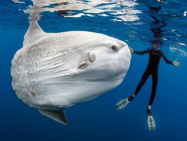 بزرگترین ماهی استخوانی جهان را ببینید + تصاویر