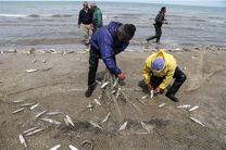 صید 2هزار و 700 تن ماهی در فصل صید از دریای مازندران