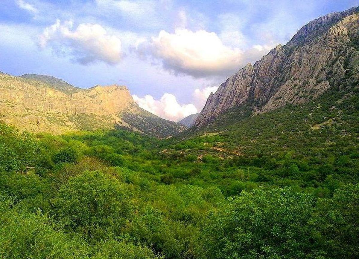 شتاب درختکاری در حوزه صنعتی و معدنی