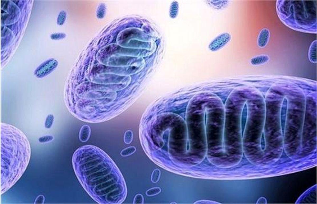 توضیح وزارت بهداشت درباره بیماری قارچ سیاه و عوارض آن