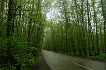 ثبت جنگل های هیرکانی گیلان در فهرست میراث جهانی یونسکو