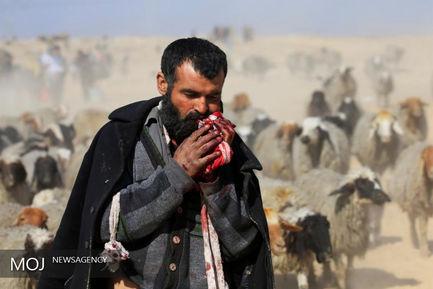 داعشایان در پناه دام