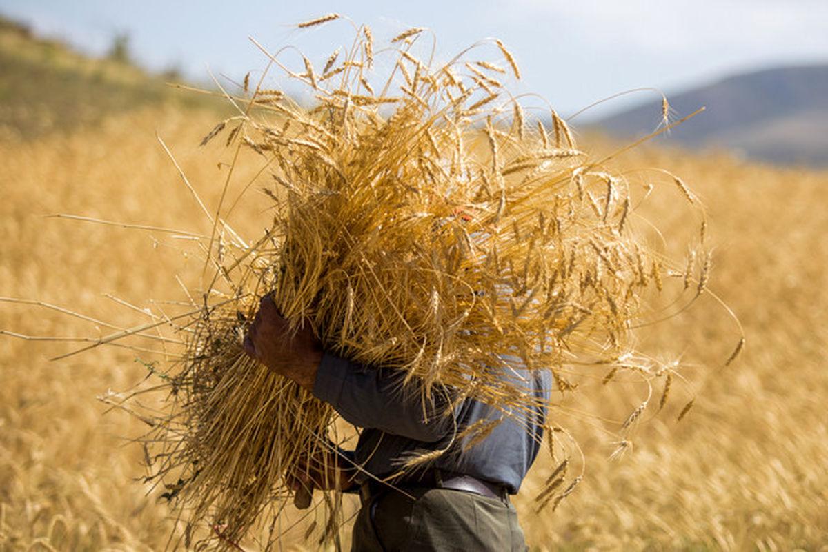 ابلاغ بسته سیاستی حمایت از کشاورزی قراردادی گندم