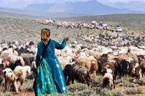 تولید بیش از 10 هزار تن گوشت قرمز توسط عشایر در استان اصفهان
