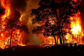 بیاحتیاطی مهمترین دلایل آتشسوزی در جنگل محسوب میشود
