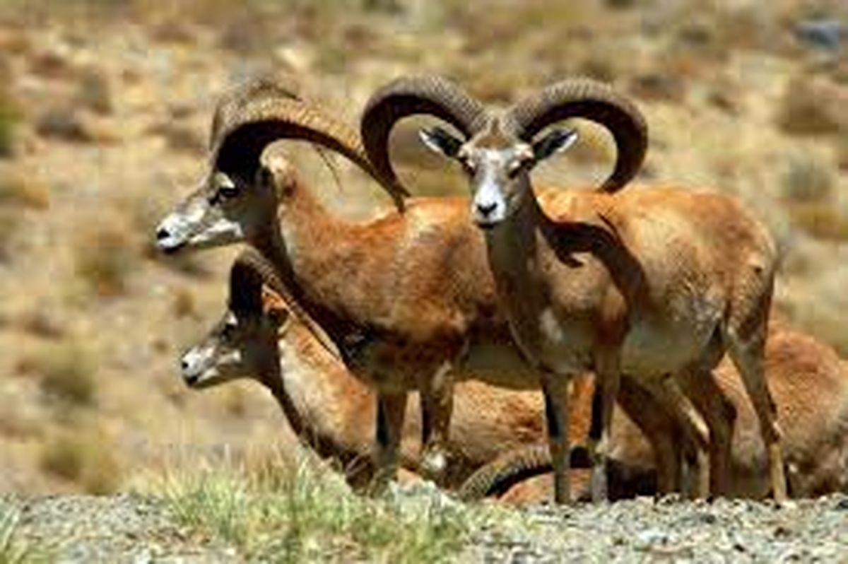 شناسایی بیش از 2 هزار گونه گیاهی و جانوری در استان اصفهان