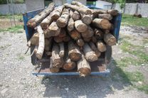 کشف 4 تن چوب قاچاق در لنگرود