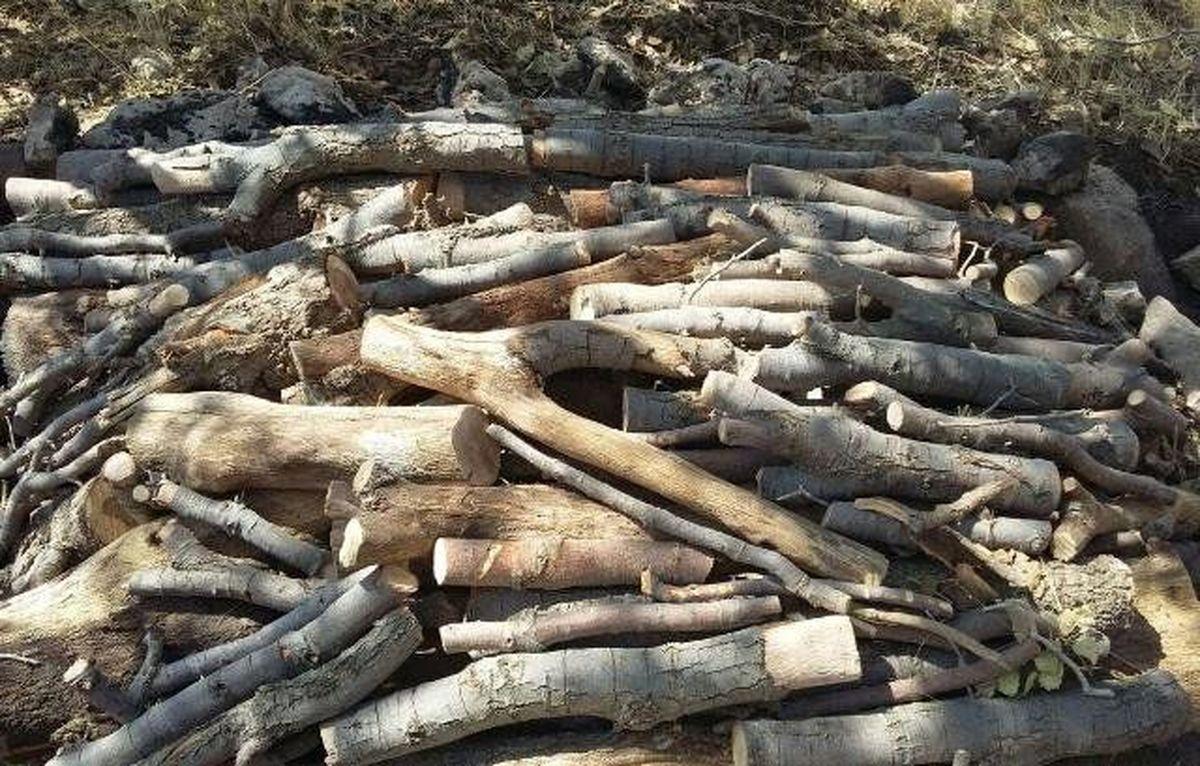 کشف 2هزار کیلو چوب جنگلی بلوط قاچاق در خمینی شهر/ دستگیری یک نفر توسط نیروی انتظامی