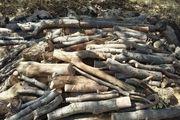 کشف بیش از 2 هزار کیلو چوب بلوط در سمیرم / دستگیری 5 نفر توسط نیروی انتظامی