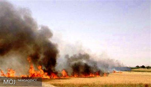 آتش سوزی در ۷۵۰ هکتار از مزارع شهرستان اسلام آبادغرب