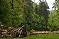 مناطق جنگلی جهان در حال کاهش است