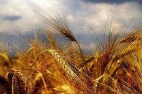 نرخ خرید تضمینی محصولات کشاورزی در سال ۹۶ اعلام شد