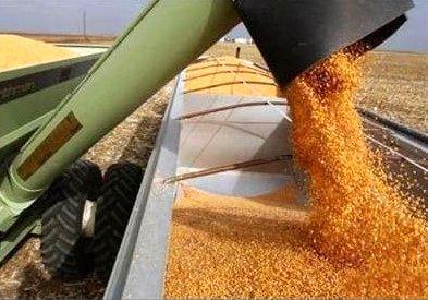 صادرات نخستین محموله گندم خوزستان به عمان