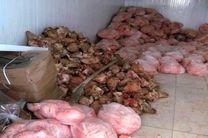 500 کیلو گوشت و مرغ فاسد کشف و معدوم شد