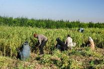 توصیههای هواشناسی کشاورزی برای روزهای ابتدایی خرداد