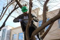 عملیات هرس زمستانه درختان سطح شهر  سنندج آغاز شد