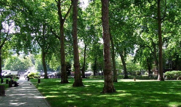 جابجایی دو هزار و 745 اصله درخت چند ساله در شهر اصفهان