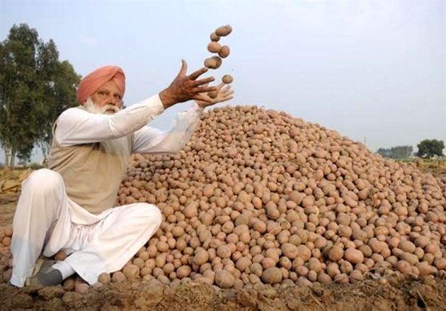 ایران ۵ هزار تن سیب زمینی از هند میخرد