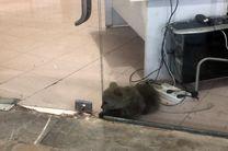 قصور پارک پردیسان در نگهداری از توله خرس/با متخلفان برخورد خواهد شد