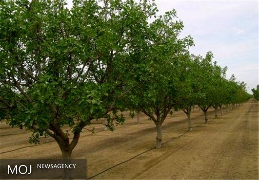 توسعه باغها و کشت گیاهان دارویی در اراضی شیبدار