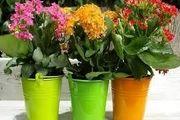 تولید سالانه 21 میلیون اصله گل و گیاه زینتی در محمودآباد