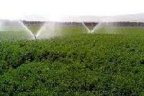 ارزش افزوده بخش کشاورزی در کردستان 2 برابر کشوری است