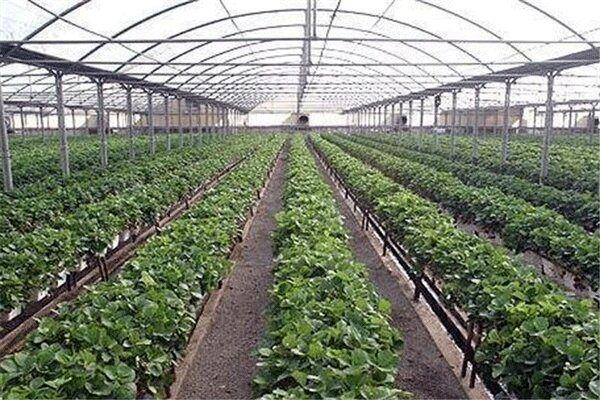توسعه گلخانهها یکی از سیاستهای جدی برای رشد اقتصادی استان است