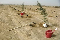 توقف درختکاری در سطح شهر قم